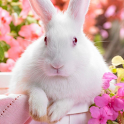 easter bunny live wallpapers icon