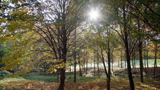 arboretum de Corbé Saint Benoit la Chipotte Vosges 88