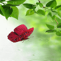 Rainy Butterfly LWP icon