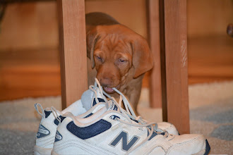 Photo: Still loves shoes and laces