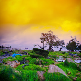 Green  by Muhammad Fadhil - Landscapes Beaches