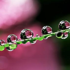 by Ahmad Soedarmawan - Nature Up Close Water