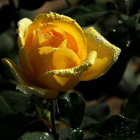 In the early morning ! by Debartist Lightpainter - Flowers Single Flower