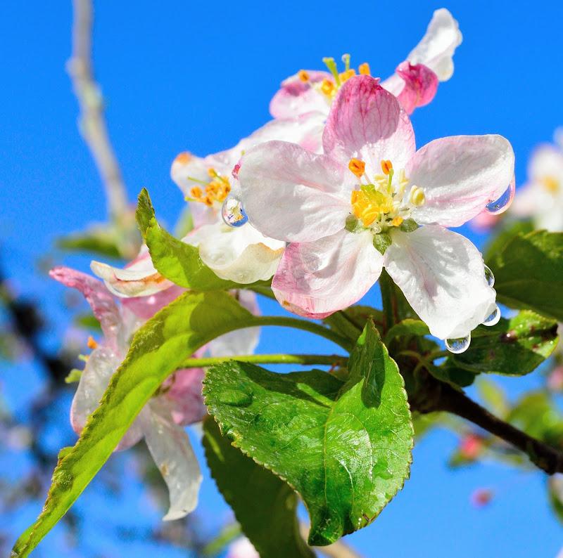 Colori e riflessi di primavera di TITTA54