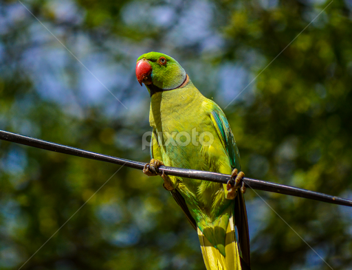 Beautiful Parrot Birds Animals Pixoto