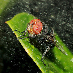 struggle by Putu Yustiantara - Animals Insects & Spiders