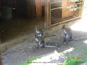 Photo: prachtige Kangoeroes
