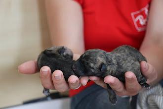 Photo: roze(eerst geboren) en lila(de kleinste pup)