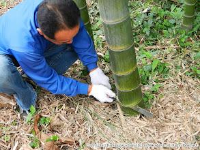 Photo: 【平成24年(2012) 太鼓開き】  厄病退散を願う道切りを設置するため、竹を切り出す。