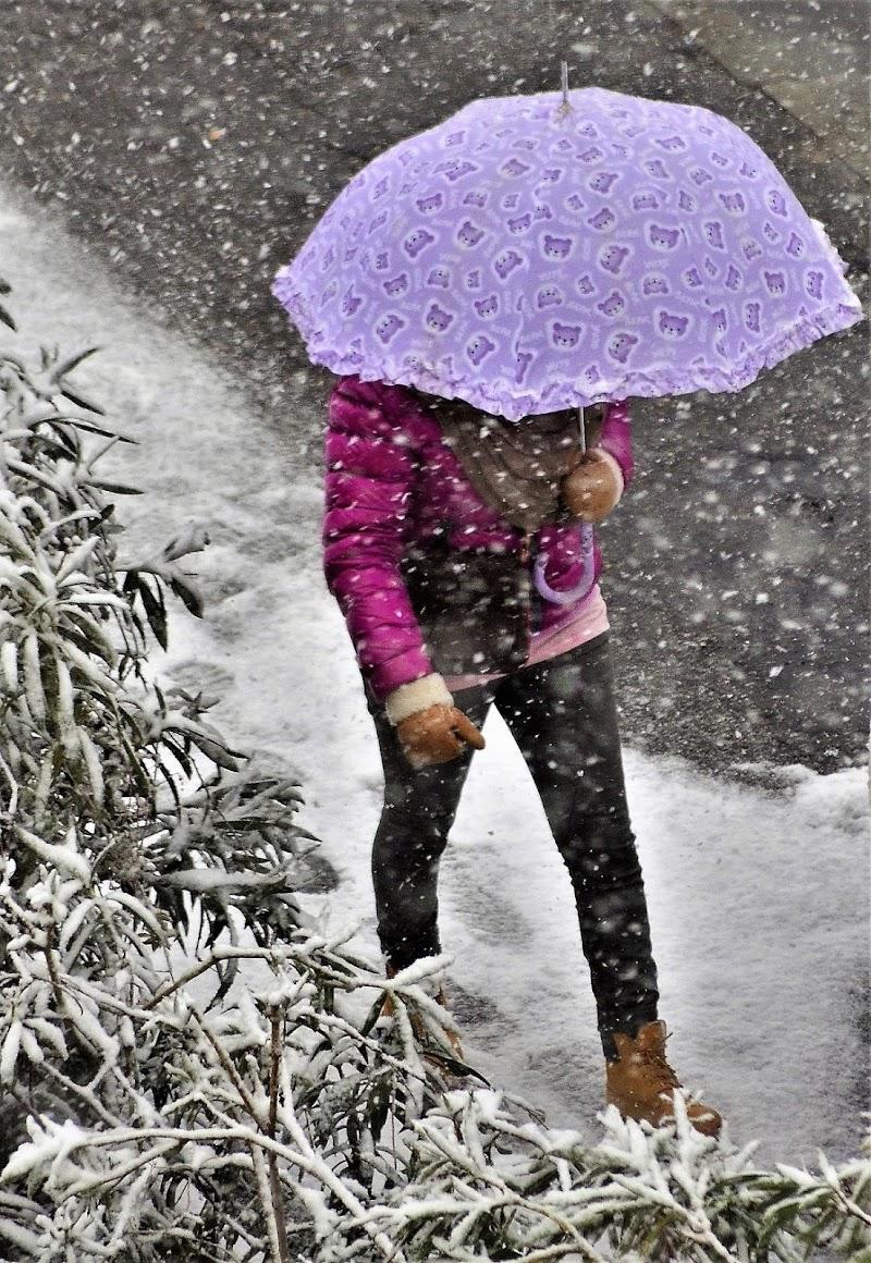 Nevicata in città di ely50