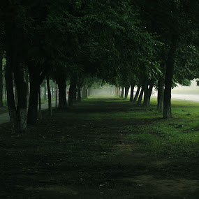 The path not taken by Satminder Jaggi - City,  Street & Park  City Parks ( park, path, trees, chandigarh, early morning )