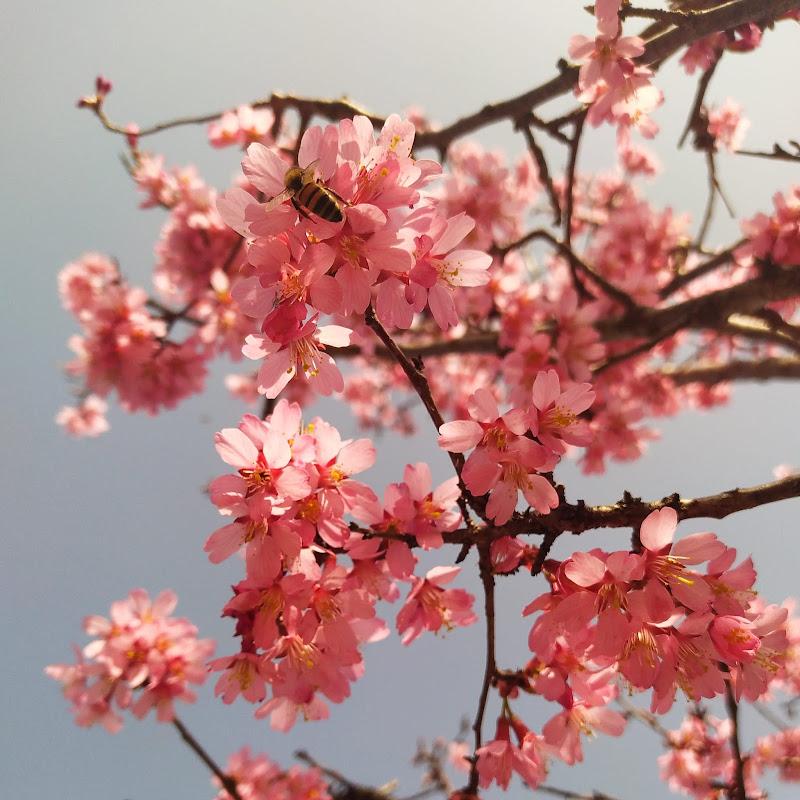 primavera dei sensi di Matteo97