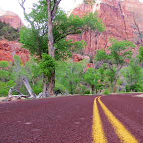 by IS Photography - Transportation Roads ( national park, desert, highway, road, zion )