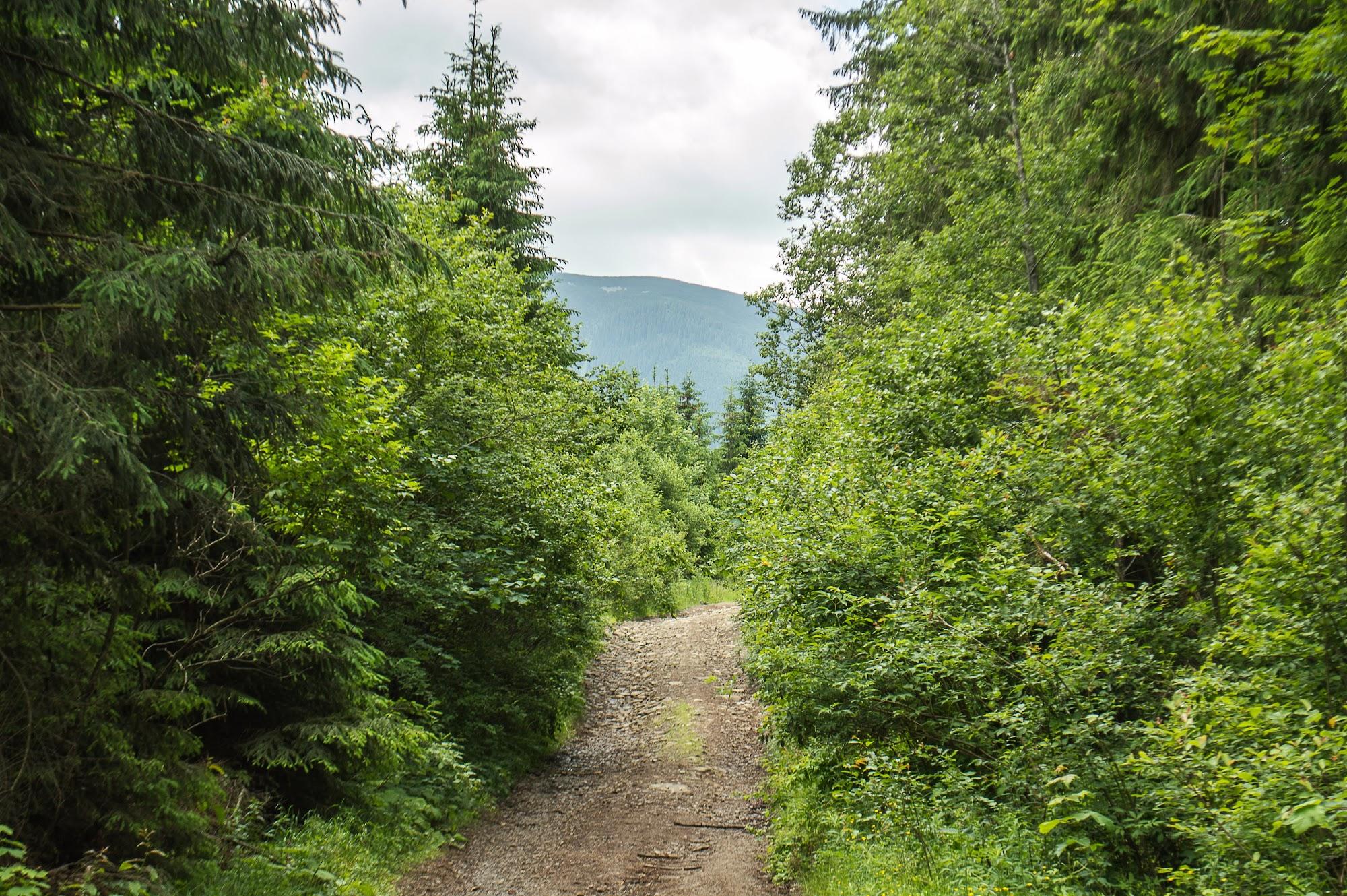 Дорога на Плісце