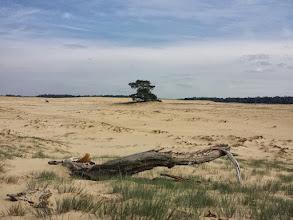 Photo: Landschap De Veluwe Foto: Yvonne Rikkenberg