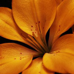 by Lauren McGuirt - Nature Up Close Flowers - 2011-2013