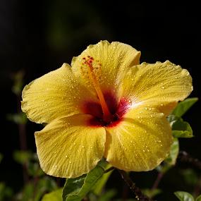 by Luc Raymond - Flowers Single Flower
