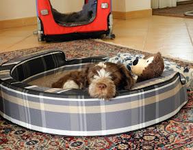 Photo: und im schicken Kuschelkorb mit ihrem Teddy und der Decke (die bestimmt noch toll nach Mama und den Geschwistern duften)