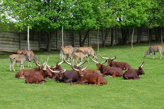 Photo: Afričtí kopytníci v safari