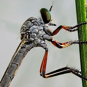 by Khokon Sekh - Animals Insects & Spiders