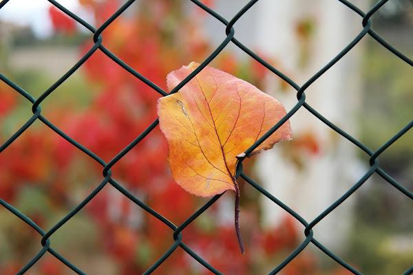 l'inizio dell'autunno di rino_savastano