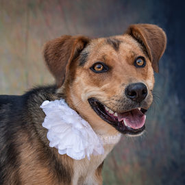 Dreamy eyes by Myra Brizendine Wilson - Animals - Dogs Portraits ( pets, shelter dogs, canine, rescue dogs, dog )