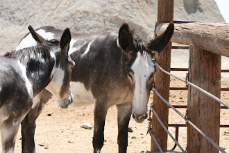 Photo: Burros.2012