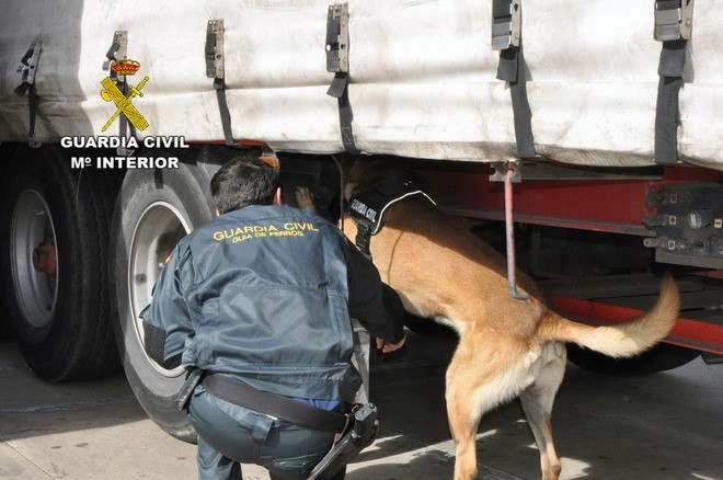 Los agentes de la Guardia Civil cuentan con la ayuda de perros para la localización de polizones.