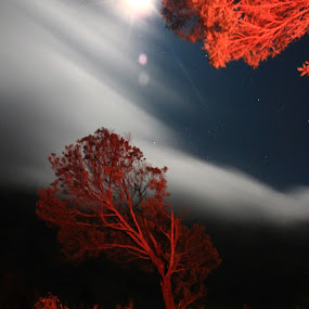 by Bobby Dozan - Novices Only Landscapes ( moon, novices, red, tree, camping, indonesia, cloud, night, travel, bromo )