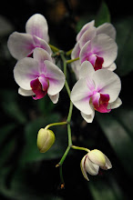 Photo: Singapore airport orchid