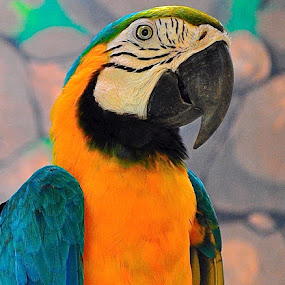 Macaw Parrot by Alvin Cheah - Animals Birds ( pwctaggedbirds )