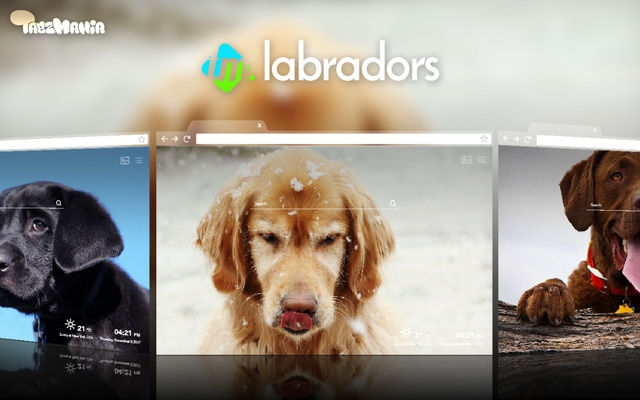 Cute Labrador Retriever Wallpapers HD