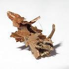 Bagworm or Case Moth caterpillar
