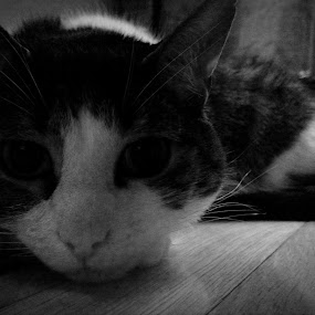 Hiding by Mason Ablicki - Black & White Animals