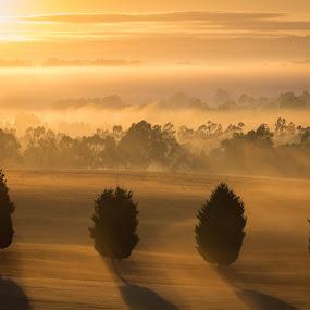 Misty Tree Sunrise by Matt Simner - Landscapes Sunsets & Sunrises ( orange, fog, victoria, hidden valley, sunrise, mist )