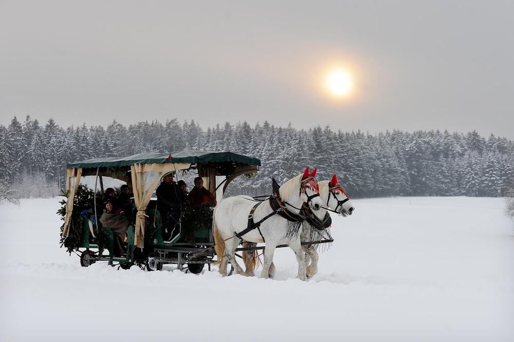 Eine Kutschfahrt durch die verschneite Landschaft des Nördlichen Schwarzwald