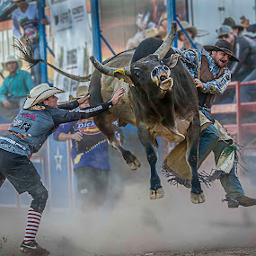 I'm Out of Here by Paul Milliken - Sports & Fitness Rodeo/Bull Riding ( rodeo clown, rodeo, bullriding )