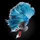 Download Most Beautiful Betta Fish For PC Windows and Mac