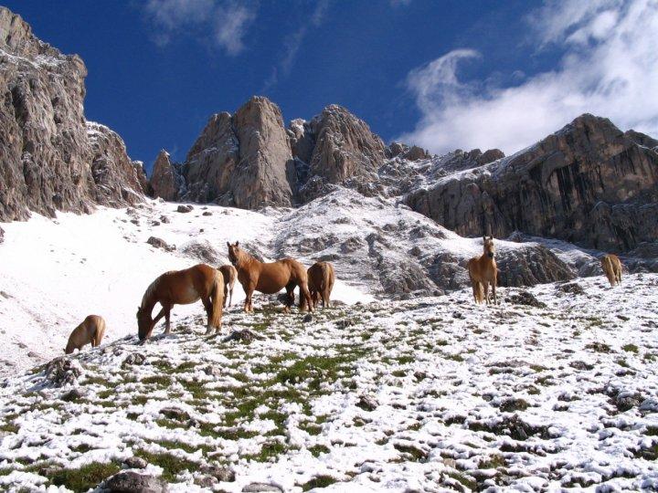 Cavalli liberi sulle Dolomiti di ulisse