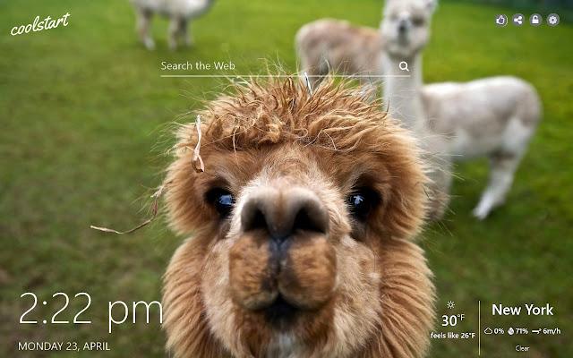Llamas HD Wallpapers Animals New Tab Theme