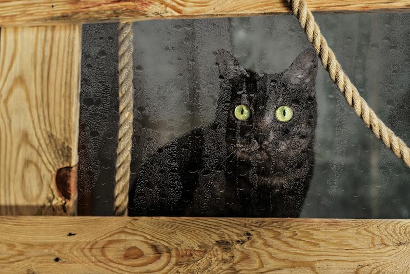 Miao di Paolinda