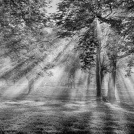 Sunrays by Pravine Chester - Black & White Landscapes ( monochrome, park, black and white, sunrays, sun )