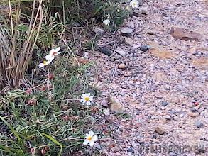 Photo: Vägkanten är inramad av små söta vita blommor