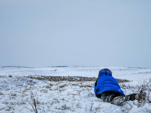 Bruno watching the reindeers feeding on Richard Island