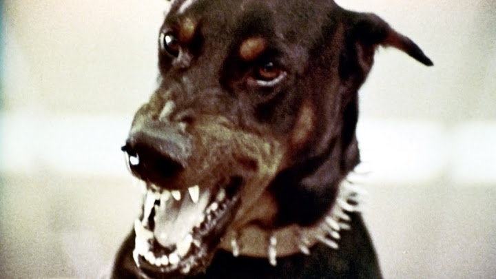 The Doberman Gang (1972) - Movies on Google Play
