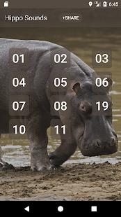Hippopotamus Sounds - náhled