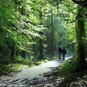 Woodland Walk by Oona Tully - Landscapes Forests ( walks, nature, trees, woodland, couple, forest )