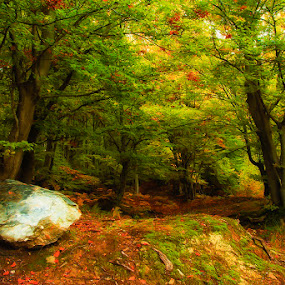 moountain forest by Costin Mugurel - Nature Up Close Trees & Bushes ( autumn, trees, rock, forest, leaves )