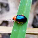 Red and blue flea beetle