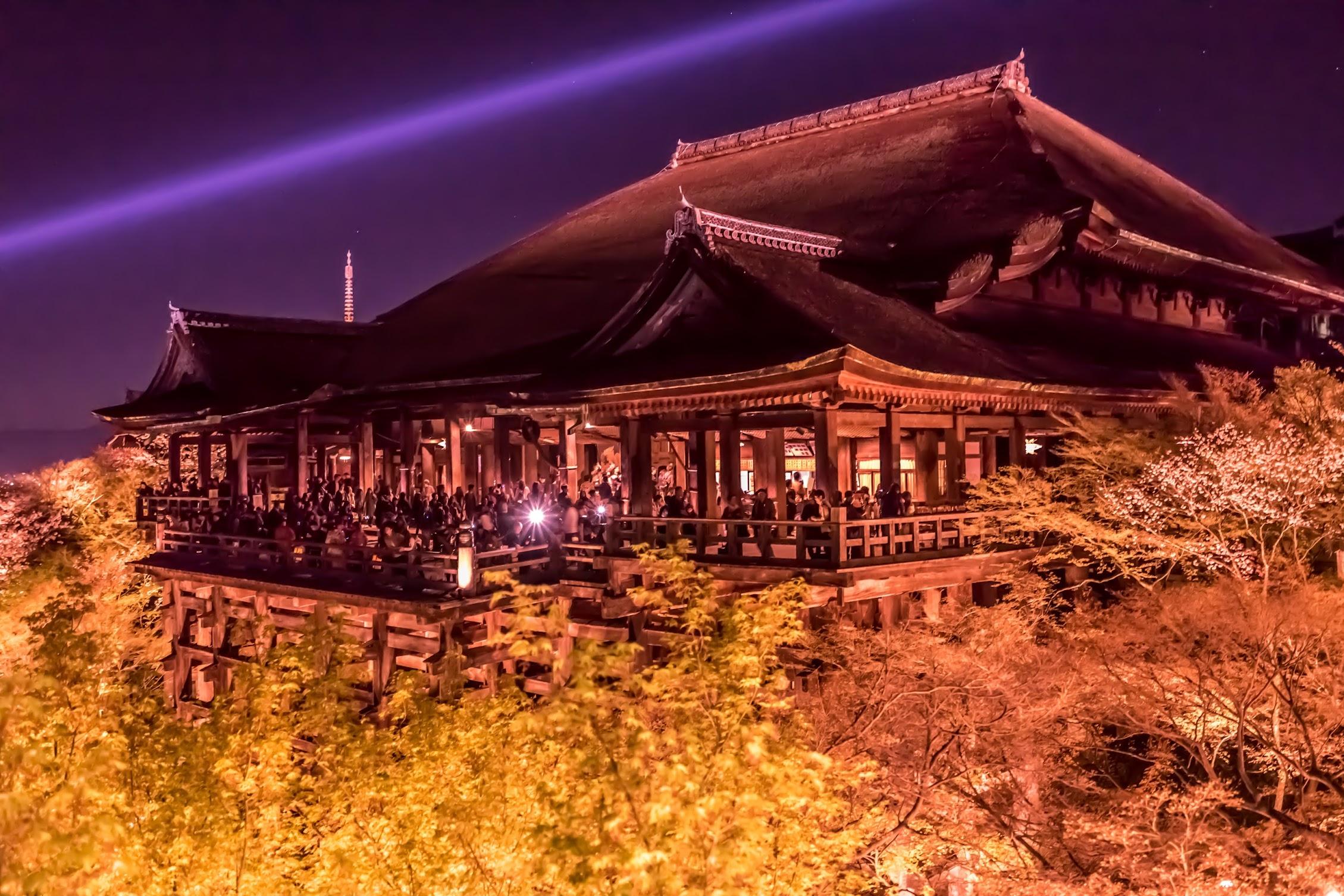 京都 桜 清水寺 ライトアップ2
